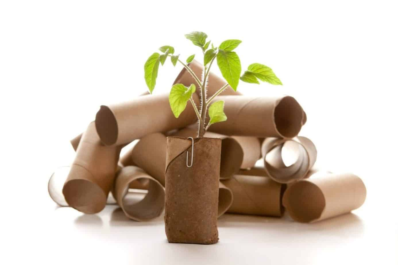 upcycled toilet paper tubes with planter
